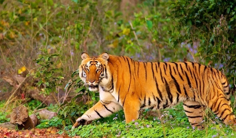 Jim Corbett Nainital Tour Package