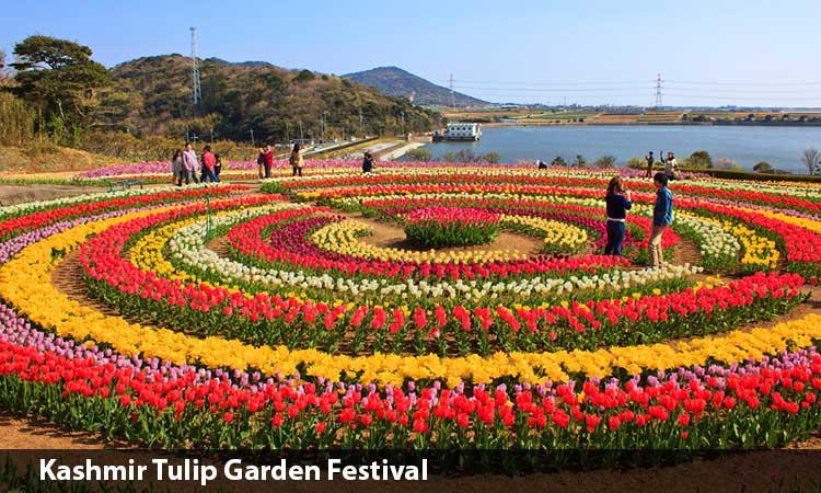 Tulip Festival Package
