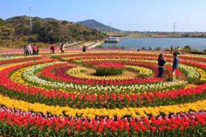 Kashmir Tulip Festival Package